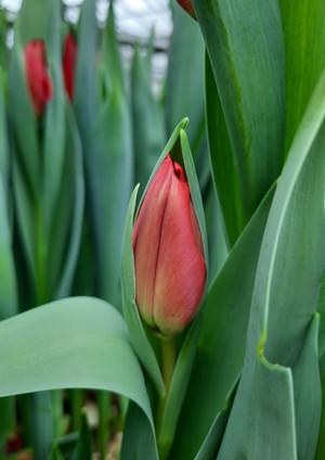 Fellner Blumen Impressionen 12