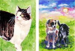 201218_shikari-website-portfolio-pet-PAI
