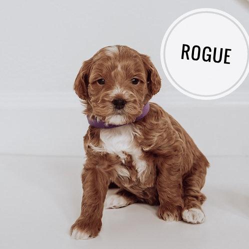 Rogue Micro F1bb