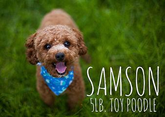 SamsonInGrass.jpg