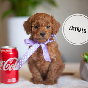 EMERALD Micro girl - RESERVED