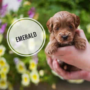 Emerald - RESERVED