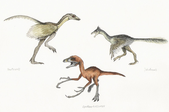 Protoavis,Epidendrosaurus,Jeholornis.jpg