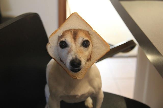 In-Bread-Dog