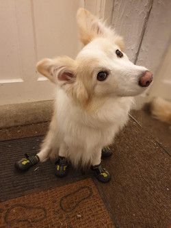 Jinx in mud boots