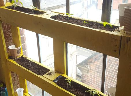Week 5 - Pallet Planters