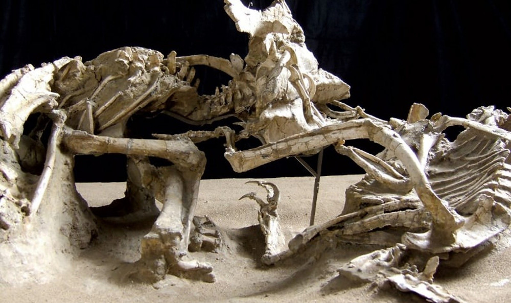 Velociraptor mongoliensis, forever locked in mortal combat with a Protoceratops