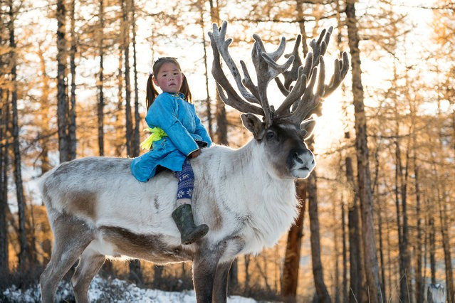 """If our reindeer die, we die. They are not just our living but our life,"" (Sanjim, Tsaatan Tribesman)"