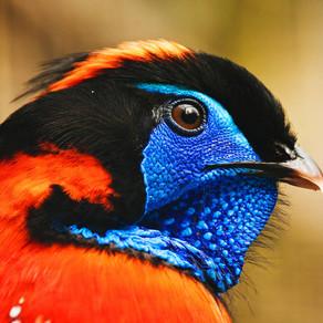 Birders-Birdwatchers-Twitchers & Ticks