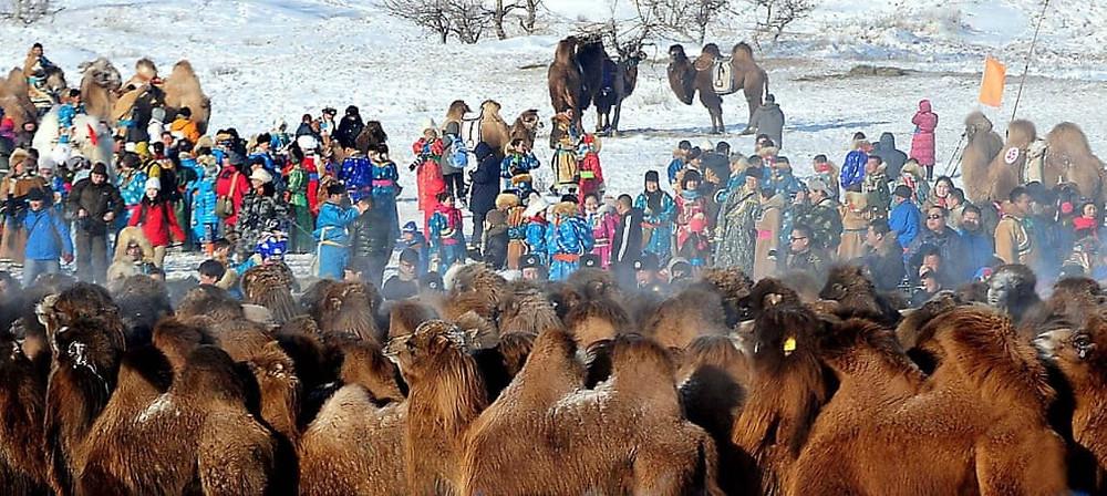 The Gobi Camel Festival