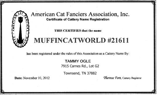 RagaMuffin Cat Wold ACFA Certificate