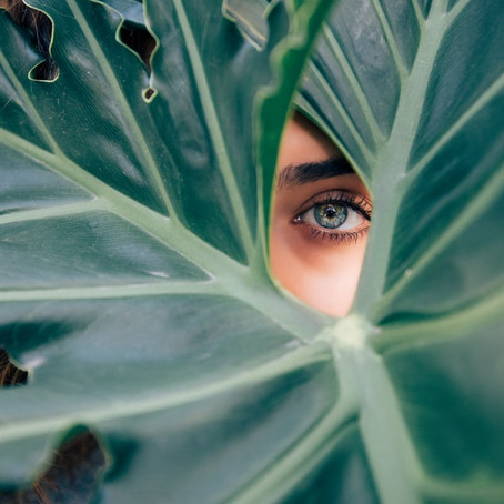 5 Eye-Beautifying Herbs to Apply Topically