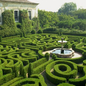 Introduction to the Labyrinth of Life Chronicles