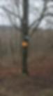 Screen Shot 2020-02-01 at 3.03.41 pm.png