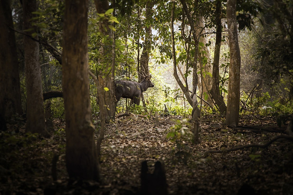 Forest # 3, Digital Photograph, 2019 Briggs