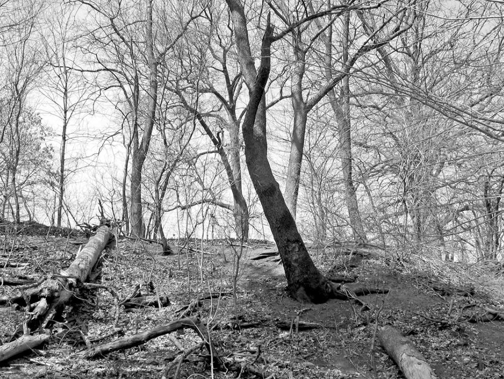 Brief History of the Woods, (Zine Detail), 2014, Digital Photograph Meuschke Frank Landscape Photography