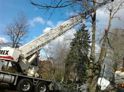 Nov+13th+Tree+003.JPG