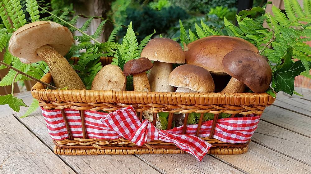 Forest mushrooms, Poland