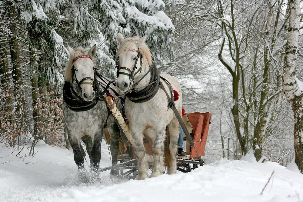 Poland, horse sleigh