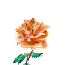 Christine's Rose 11x14 Watercolor Painting 2020