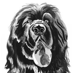 "Cyrus the Newfoundland 11x14"" Ink Painting 2019"