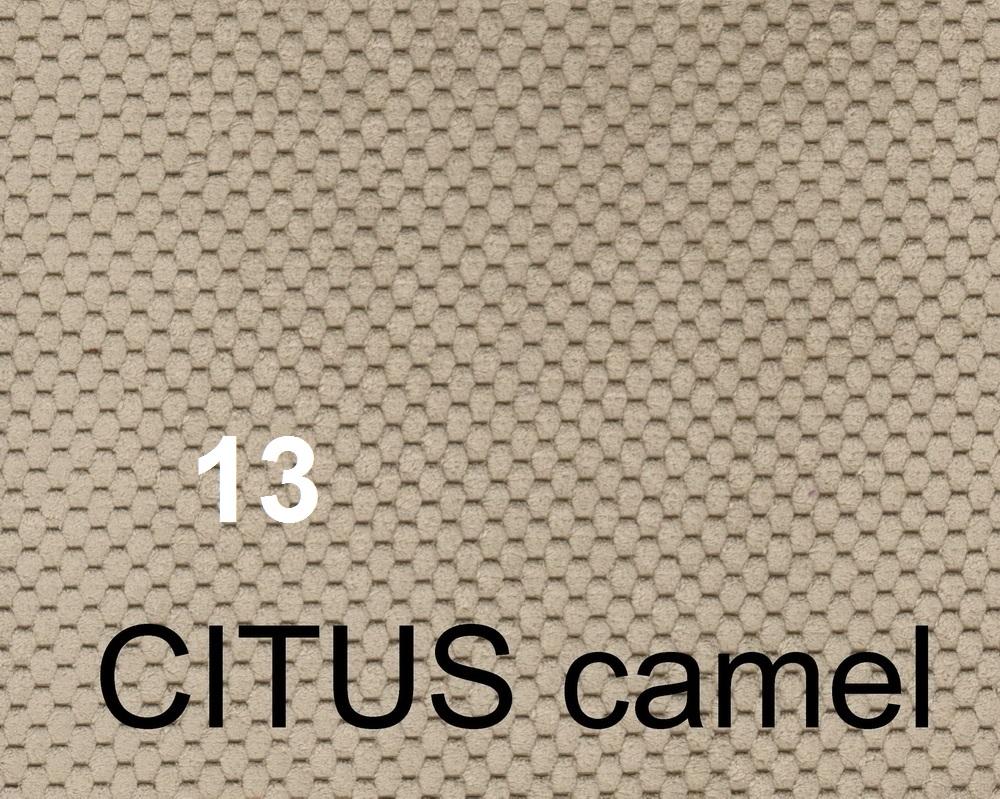 citus camel2