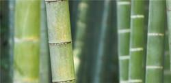 bamboo-blends-achtergrond