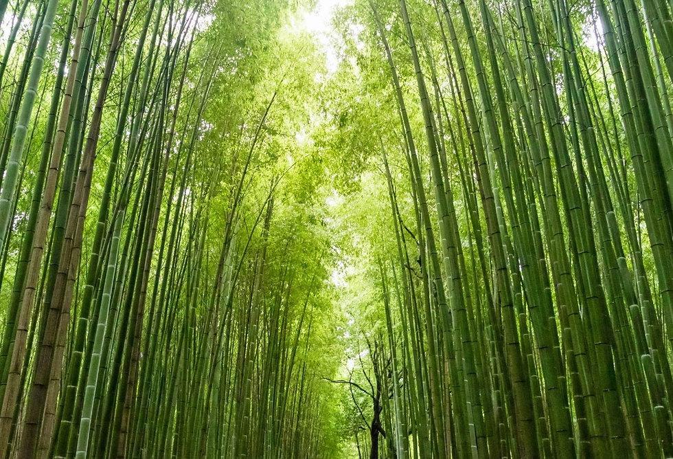 bamboo-blends-achtergrond.jpg