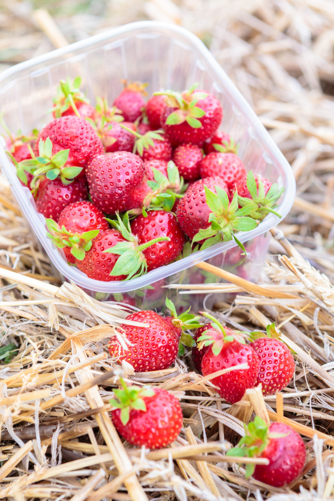 le-jardin-a-emporter-fraises-683x1024