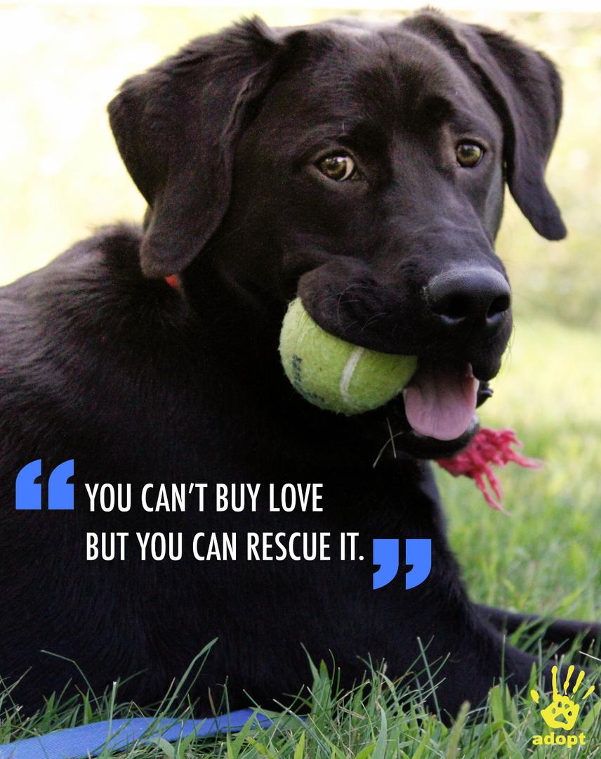 Humane Society Shot & Ad