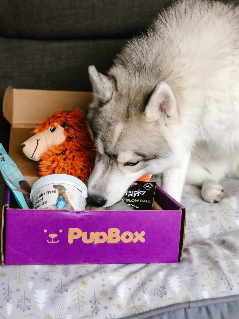 Pupbox Product Shot