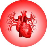 Cardiovascular  Interactive Health