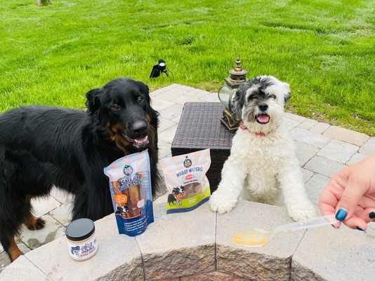 Healthy Pet Products To Try In 2021!