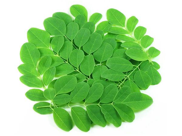 muringa-leaves.jpg