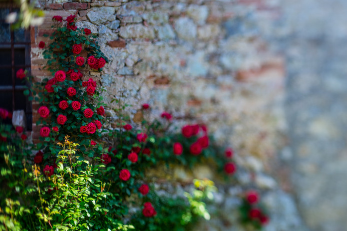 Rose Wall too.jpg