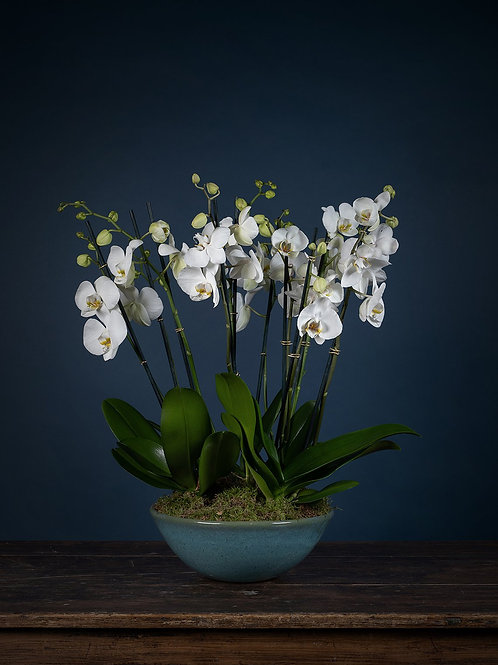 Deluxe Orchids