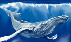 autoral baleia