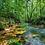 Thumbnail: Tiger Eye Rainforest