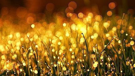 grass-3375344_640.jpg