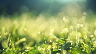 meadow-3743023_640.jpg