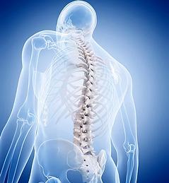 craniosacral spine.webp