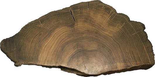 tree_ring_3.png