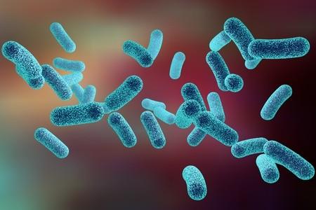 bacterie piscine legionnelle