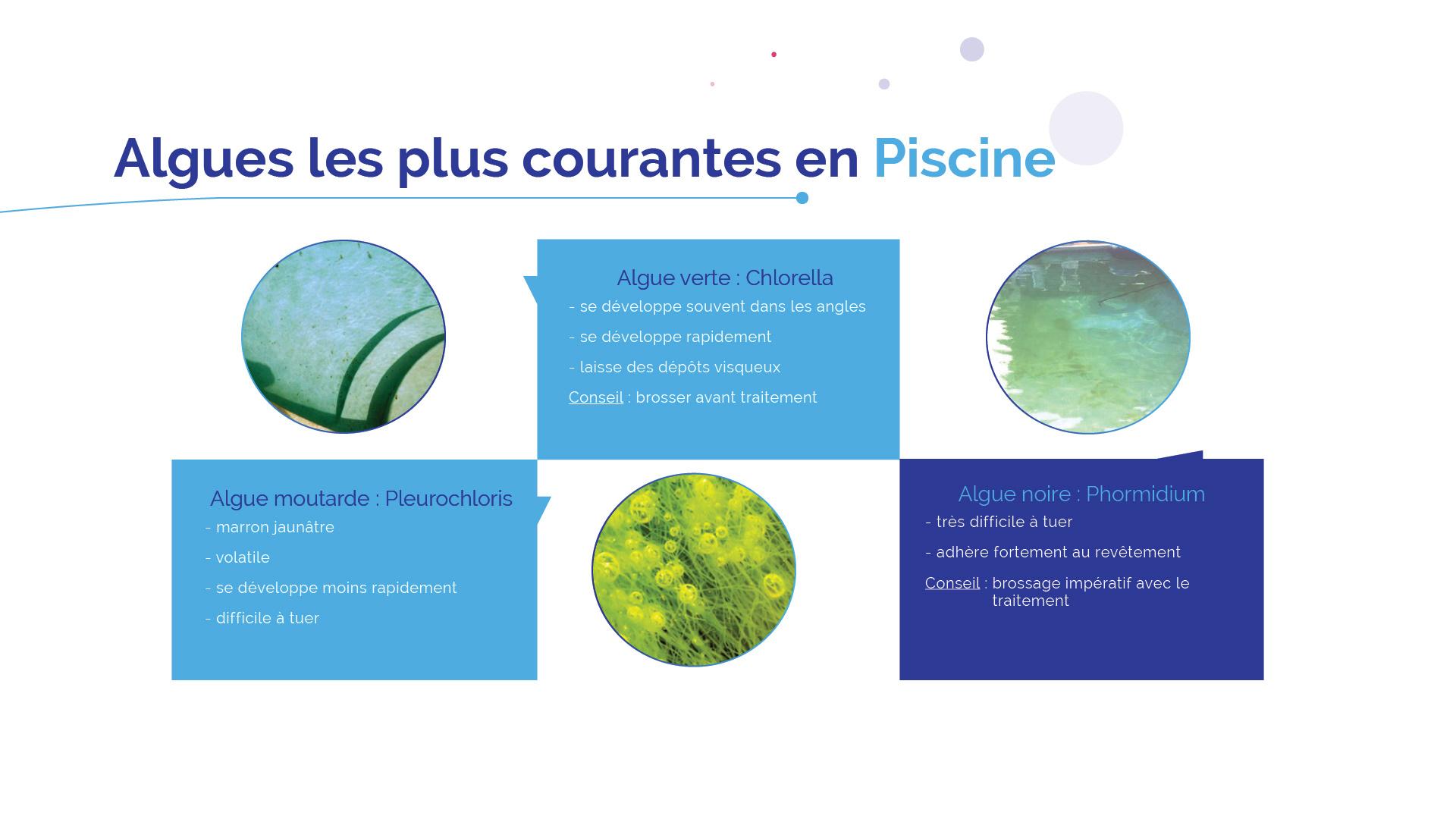 algue en eau de piscine