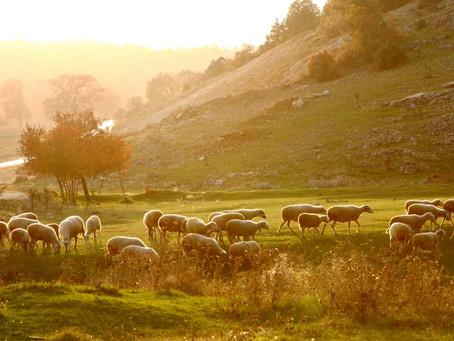 The Gospel Of The Good Shepherd