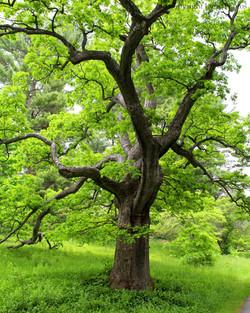 tree wellesley college ma