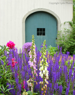 foxgloves garden door photograph