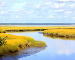 Salt Marsh Plum Island MA