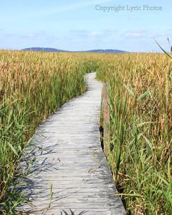 Boardwalk Parker River Plum Island