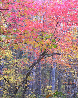 Autumn Woods Forest Fall New England